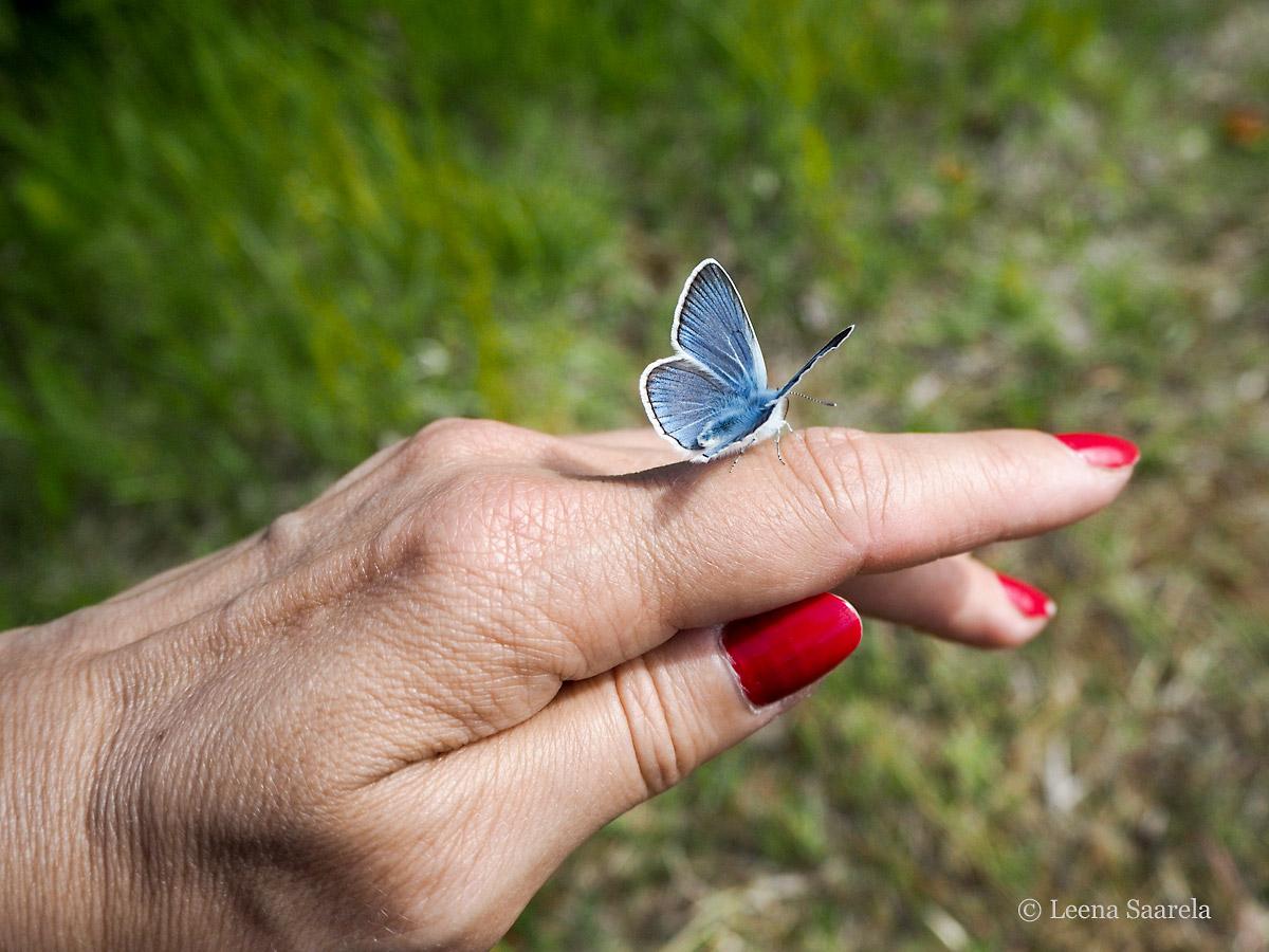 Sinivalkoinen tervehdys!